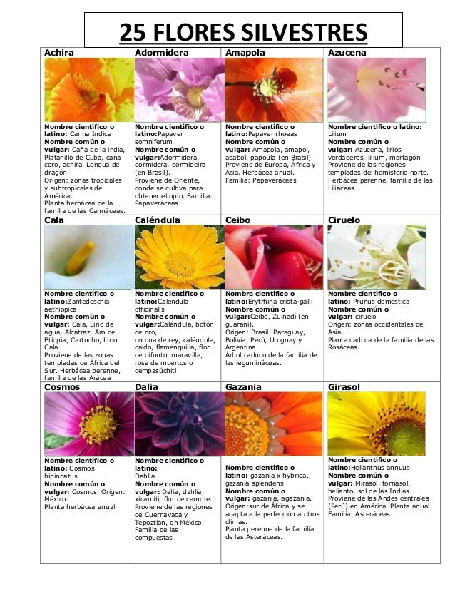 Tarjeta de guia mayor especialidad flores - Lista nombre arbustos ...