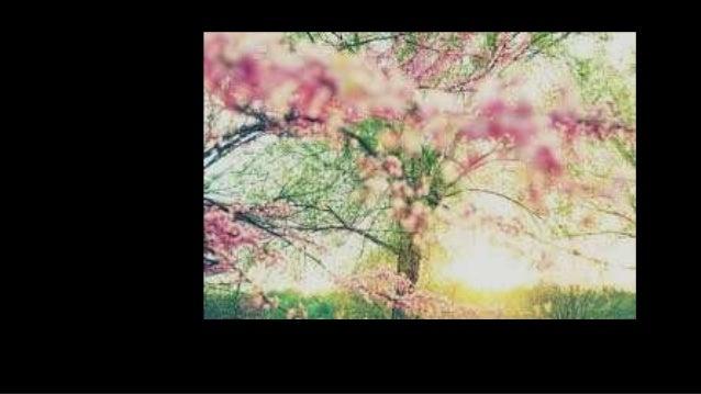 Flores Tumblr