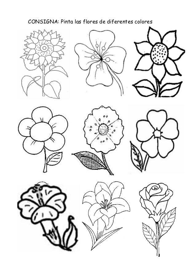 Flores for Plantas ornamentales para colorear