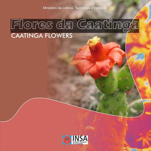 C355f Castro, Antonio Sérgio. Flores da caatinga = Caatinga flowers / Antonio Sérgio Castro, Arnóbio Cavalcante. Campina G...