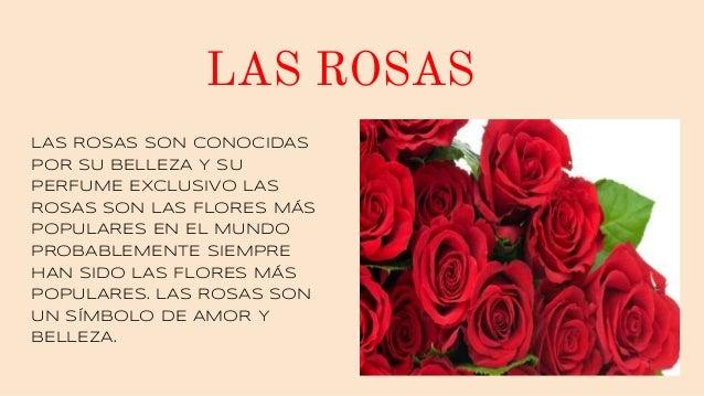 LAS ROSAS LAS ROSAS SON CONOCIDAS POR SU BELLEZA Y SU PERFUME EXCLUSIVO LAS ROSAS SON LAS FLORES MÁS POPULARES EN EL MUNDO...