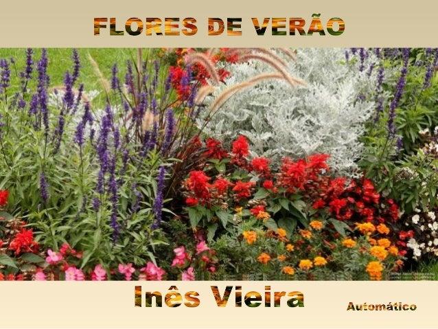 Flores de verao