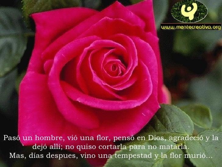 Pasó un hombre, vió una flor, pensó en Dios, agradeció y la        dejó allí; no quiso cortarla para no matarla.  Mas, día...