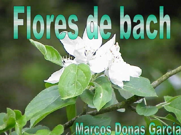 Flores de bach Marcos Donas García