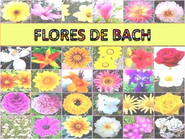 ÍNDICE - ¿Qué son las flores de Bach?  - Origen de las esencias - Edward Bach - Los 38 remedios florales - Clasificacion e...