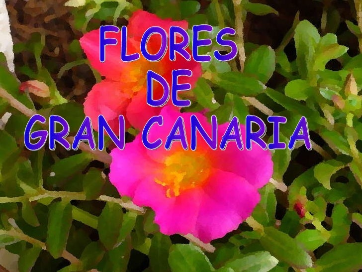 FLORES DE  GRAN CANARIA