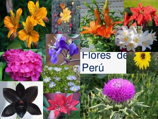 Flores del per for Plantas ornamentales del peru