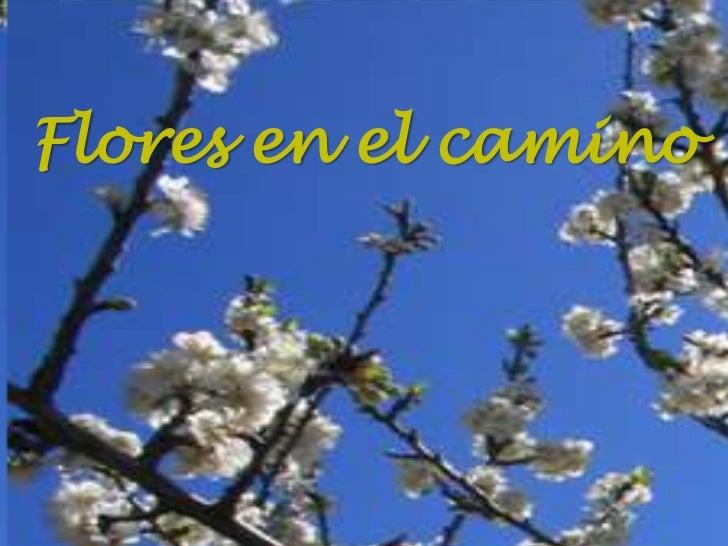 Flores en el camino<br />