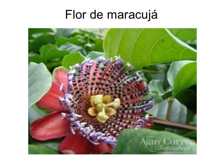 Flores exoticas for Plantas exoticas online