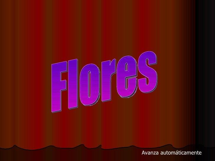 Flores Avanza automáticamente