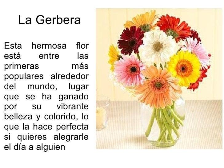 La Gerbera Esta hermosa flor está entre las primeras más populares alrededor del mundo, lugar que se ha ganado por su vibr...