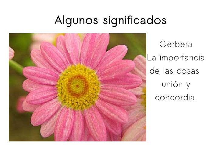 Algunos significados Gerbera La importancia de las cosas  unión y concordia.
