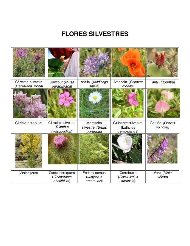 Flores silvestres e insectos for Plantas decorativas con sus nombres