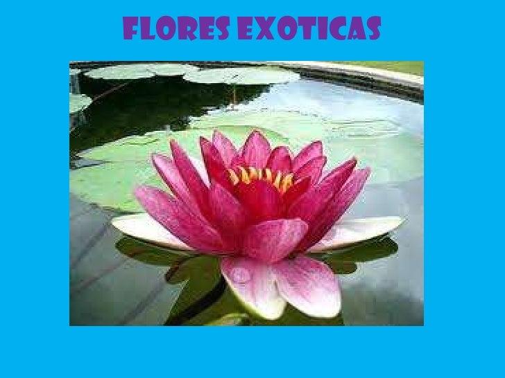 FLORES EXOTICAS<br />
