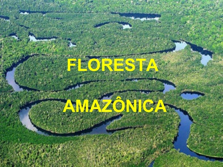 FLORESTAAMAZÔNICA