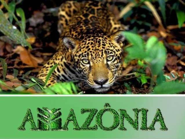 Introdução  Situada na região norte da América do Sul, a floresta  amazônica possui uma extensão de aproximadamente  7 mil...