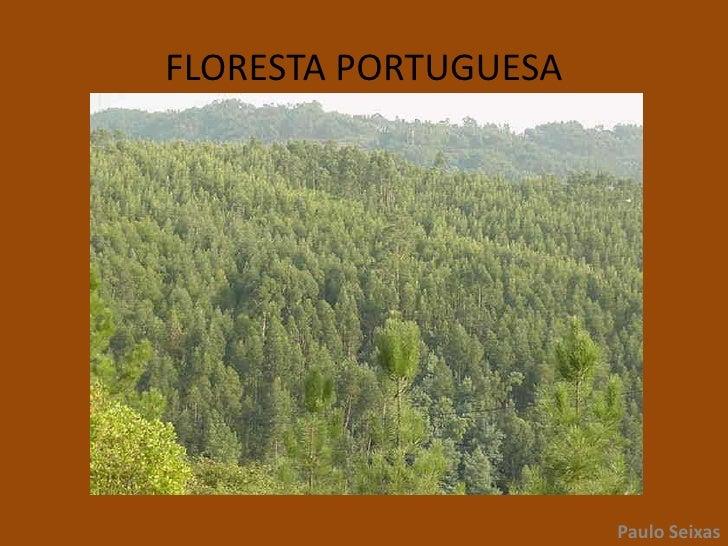 FLORESTA PORTUGUESA<br />Paulo Seixas<br />