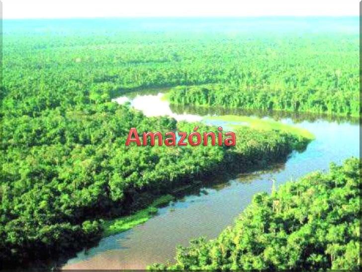 Florestas<br />Amazónia<br />