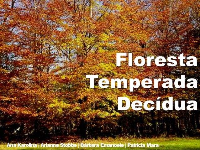 Floresta Temperada Decídua Ana Karolina | Arianne Stobbe | Bárbara Emanoele | Patricia Mara