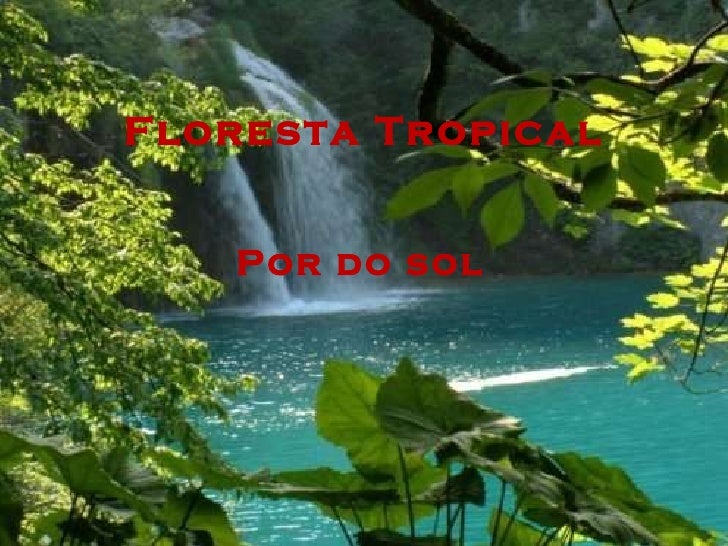 Floresta Tropical Por do sol