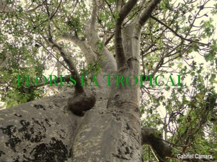    Os bioma denominado floresta tropical, também chamado de    floresta pluvial tropical, é encontrado em regiões de clim...