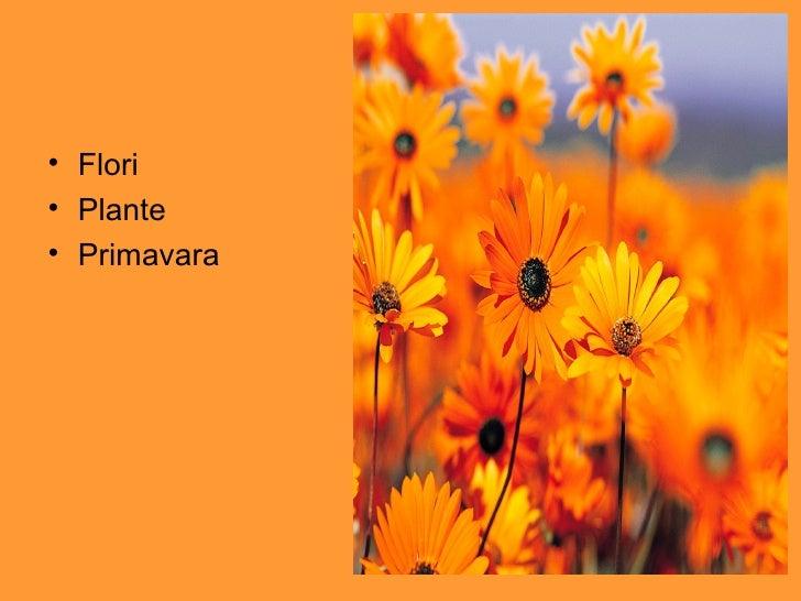<ul><li>Flori </li></ul><ul><li>Plante </li></ul><ul><li>Primavara </li></ul>