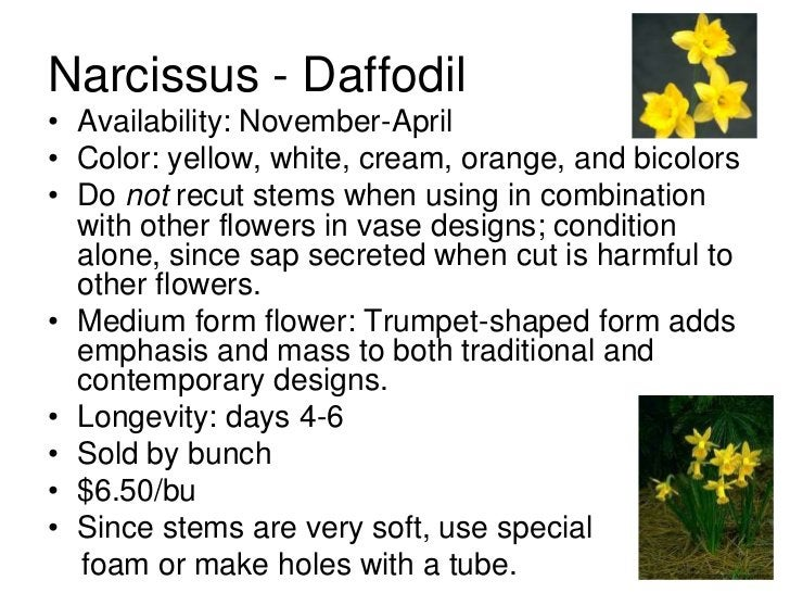 Narcissus - Daffodil• Availability: November-April• Color: yellow, white, cream, orange, and bicolors• Do not recut stems ...
