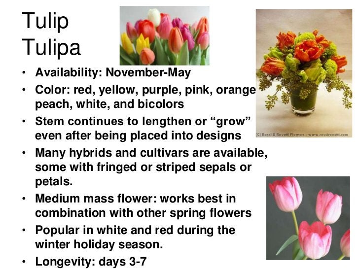 TulipTulipa• Availability: November-May• Color: red, yellow, purple, pink, orange,  peach, white, and bicolors• Stem conti...