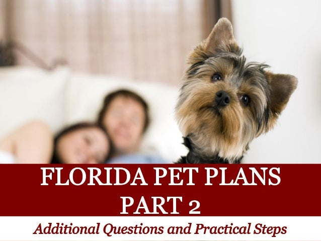 Florida Pet Plans: Additional Questions and Practical Steps