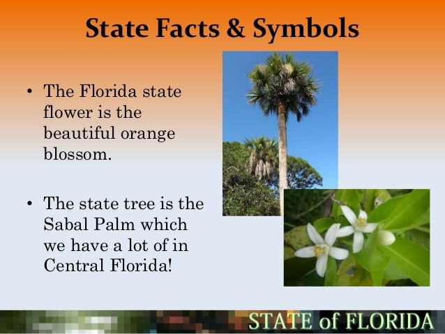Florida Project - Florida state bird and flower and tree