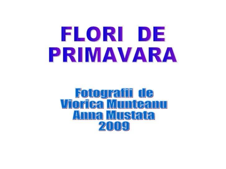 FLORI  DE  PRIMAVARA Fotografii  de Viorica Munteanu Anna Mustata 2009
