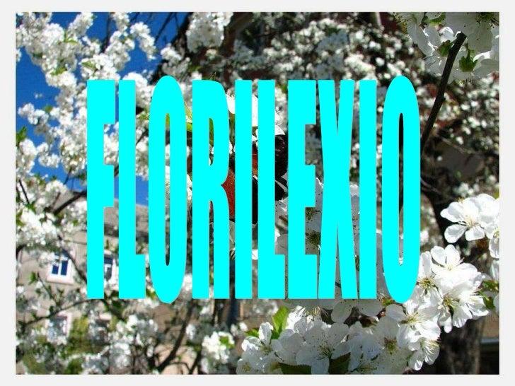 FLORILEXIO