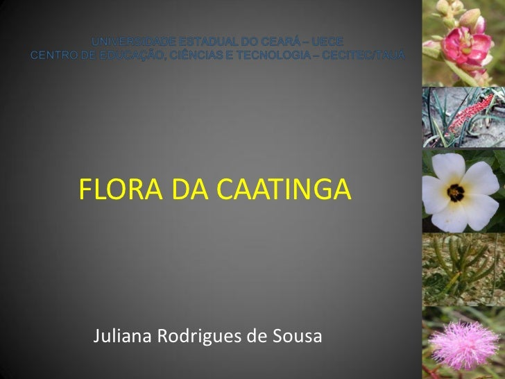 FLORA DA CAATINGAJuliana Rodrigues de Sousa