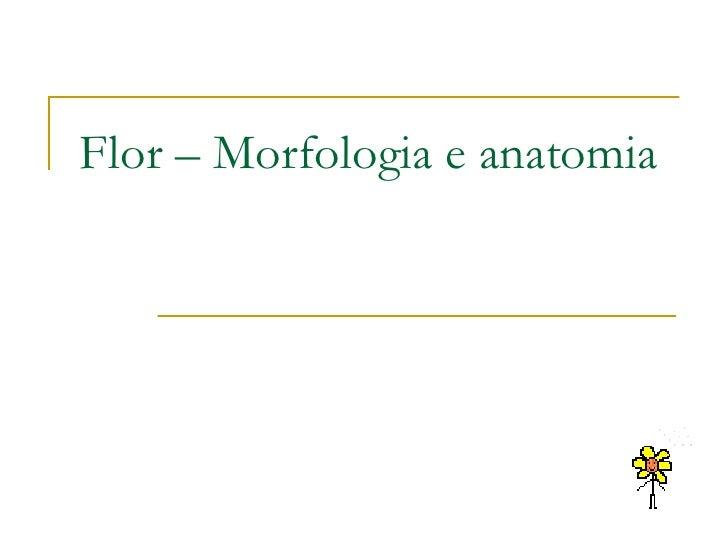 Flor – Morfologia e anatomia