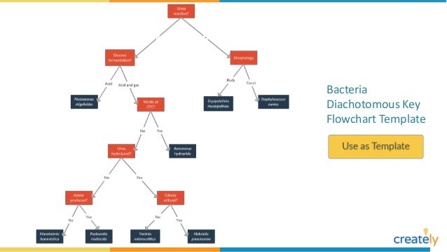 flowchart examples with editable templates 21 638?cb=1535628019 flowchart examples with editable templates