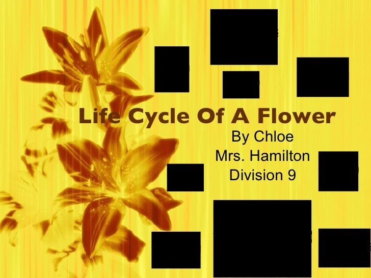 Life Cycle Of A Flower By Chloe Mrs. Hamilton Division 9