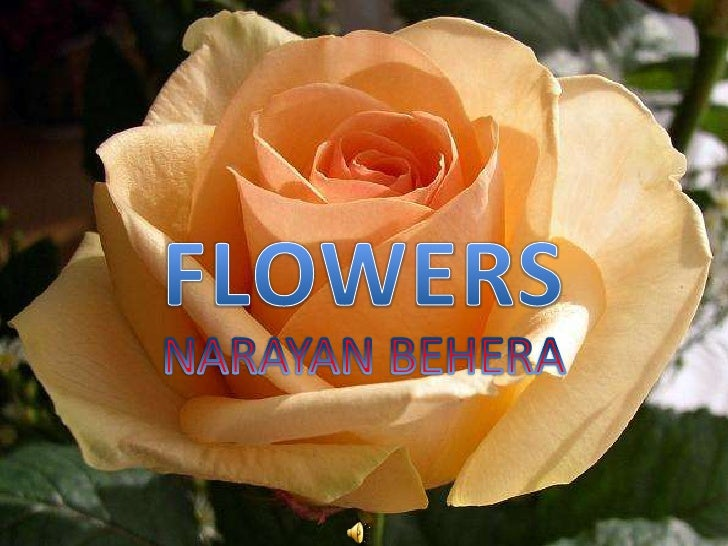 FLOWERS<br />NARAYAN BEHERA<br />