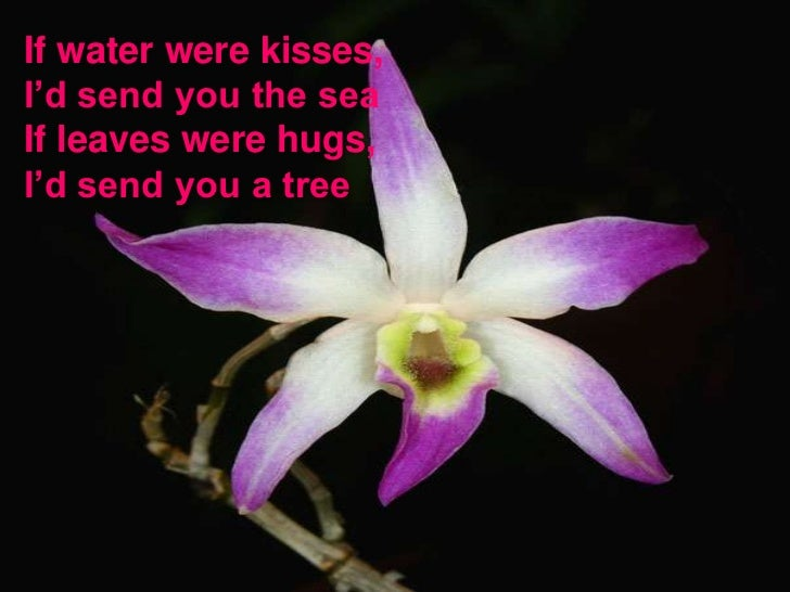 If water were kisses, I'd send you the sea If leaves were hugs, I'd send you a tree <br />