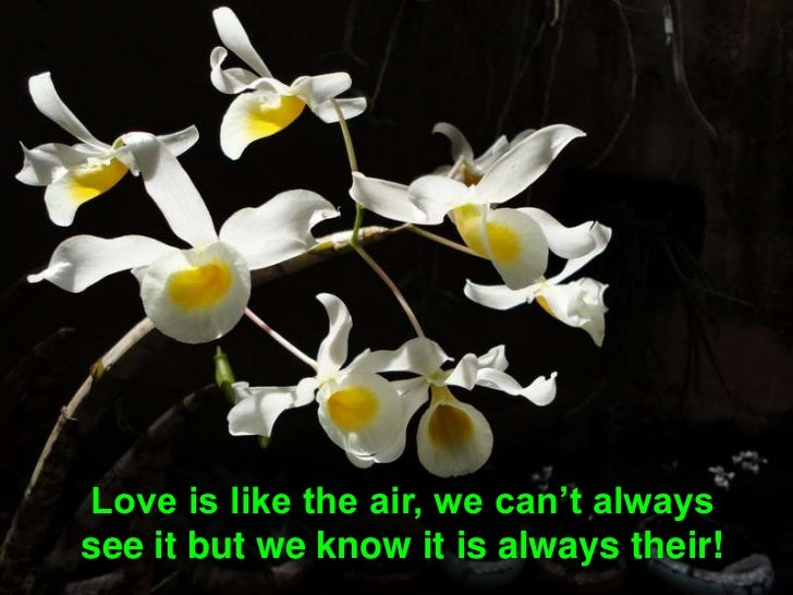 Love is like the air, we can't always see it but we know it is always their! <br />