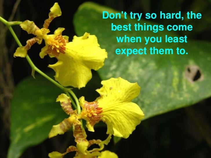 Don't try so hard, the best things come when you least expect them to.<br />