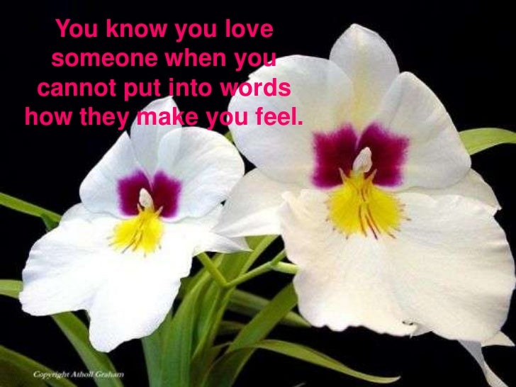 You know you love someone when you cannot put into words how they make you feel.<br />