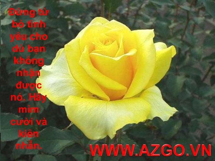 Đừng từ bỏ tình yêu cho dù bạn không nhận được nó. Hãy mỉm cười và kiên nhẫn.<br />WWW.AZGO.VN<br />