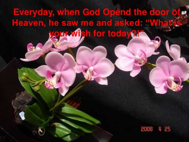 """Everyday, when God Opend the door of Heaven, he saw me and asked: """"What is your wish for today?!""""<br />"""