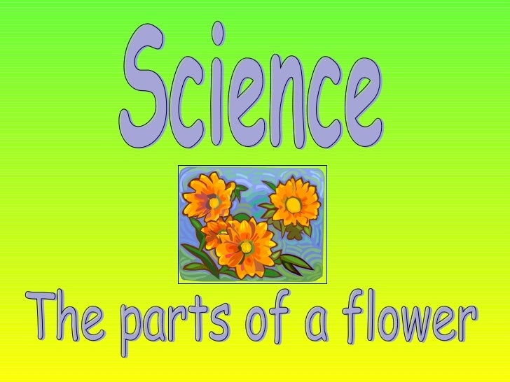 The parts of the flowers science the parts of a flower ccuart Images