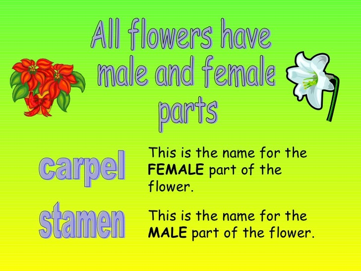 The parts of the flowers