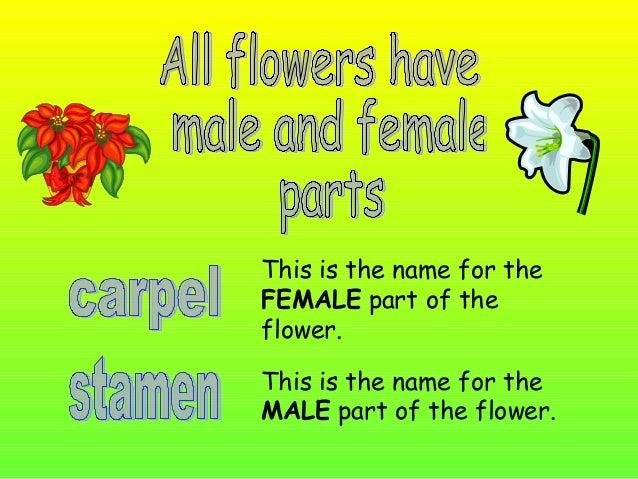 (female part)