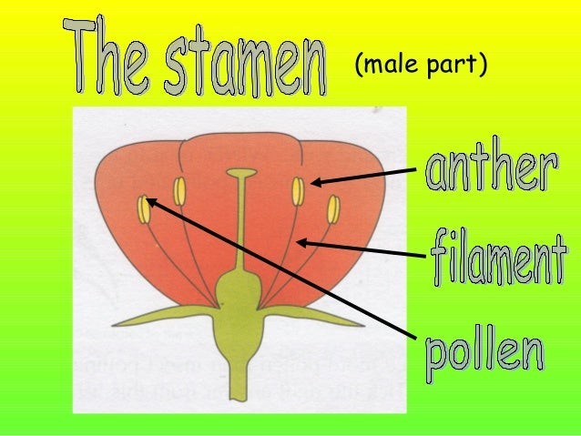 Label the following parts on your diagram… stigma style ovary anther filament pollen