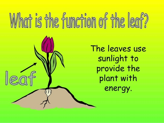 The flower helps the plant to reproduce.