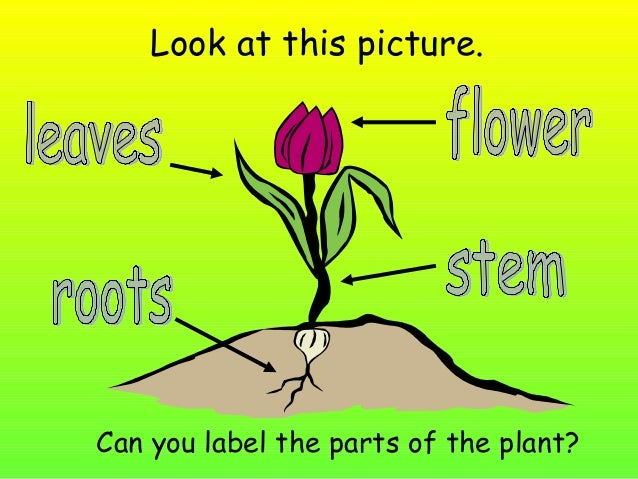 parts of a flower presentation
