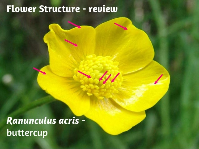Basic Structure Of Flower